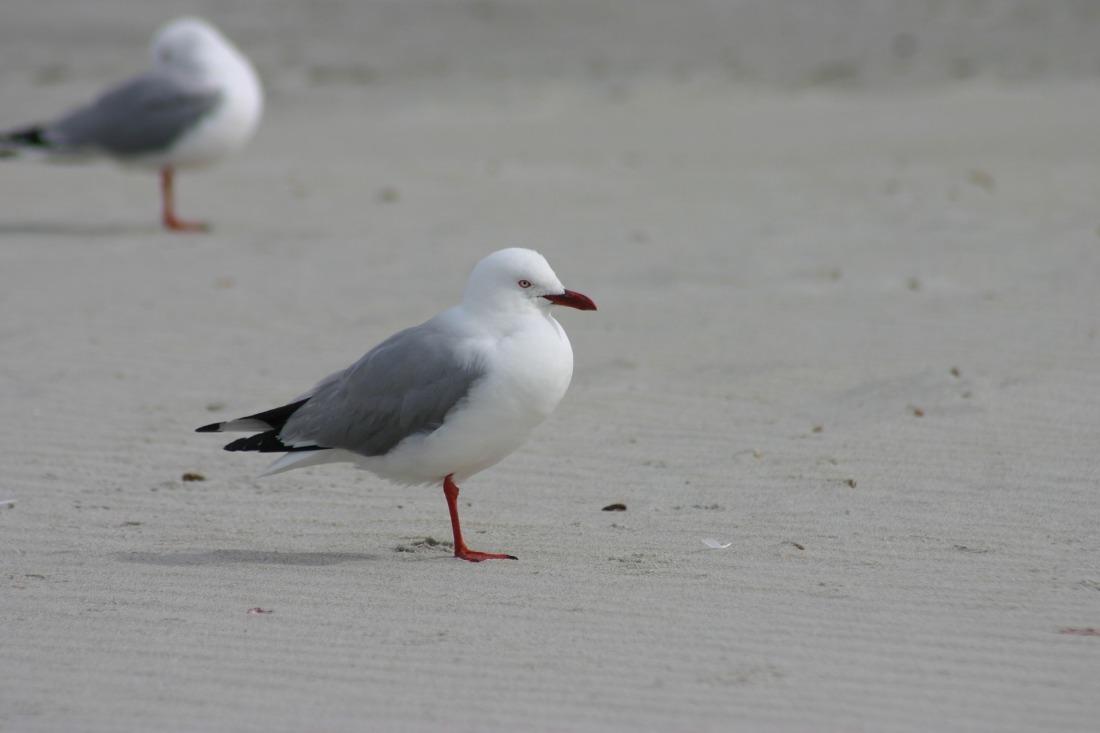 bird-3051240_1920